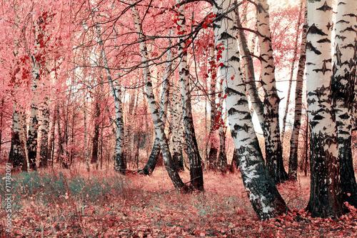 Leinwandbild Motiv pink birch grove