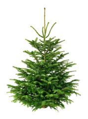 Perfekter Tannenbaum, Freisteller