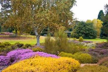 Autumn garden landscape