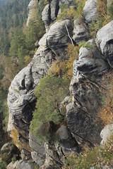 Sandsteinfels am Rauenstein in der Sächsischen Schweiz