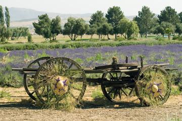 Garden Decoration Lavender Field
