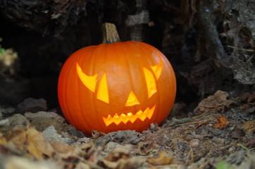 Pumpkin - Jack-o'-lantern
