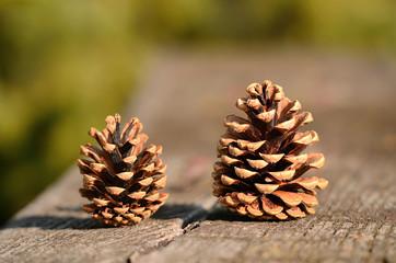 Closeup photo of pine cone