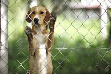 Asylum for dogs