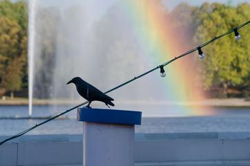 an der Alster, Fontänen-Regenbogen, Vogelscheuche auf Schiff