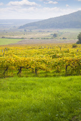 beautiful autumn vineyard landscape