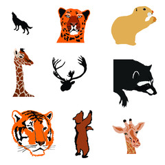 marmot,giraffe,caribou,raccoon,tiger,bear,giraffe,bear cub