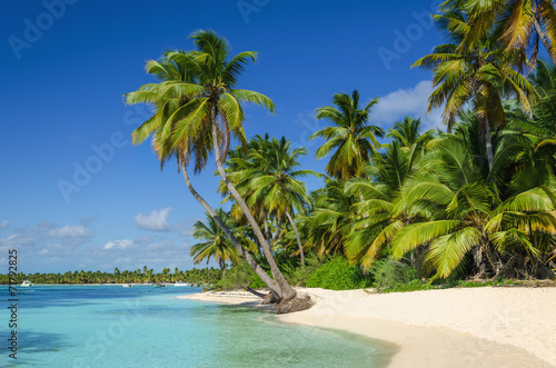 Plexiglas Centraal-Amerika Landen Exotic coast of the Dominican Republic with exotic palm trees