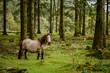 Wild pony in autumn forest