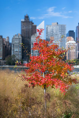 Different colors of leaves Fall New York City NYC