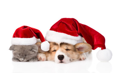 sleeping kitten and Pembroke Welsh Corgi puppy with santa hat. i