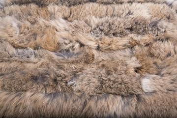 Close up of beautiful animal fur (background, wallpaper)