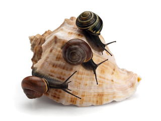 Three snails and sea cockleshell