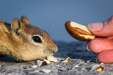 hand feeding the wildlife