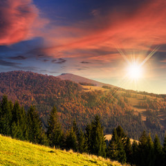 green forest on hillside meadow at sunset