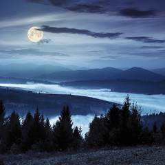 forest over foggy valley in autumn mountains at night