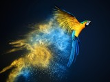 Fototapety Flying Ara parrot over colourful powder explosion