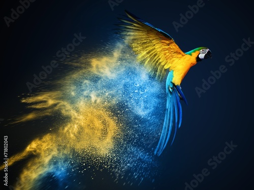 Flying Ara parrot over colourful powder explosion - 71802043