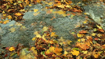 Creek in autumn forest with green grass and fallen leaves .