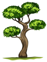 A Diospyros rhodocalyx plant
