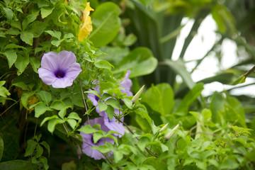 南国の花と自然