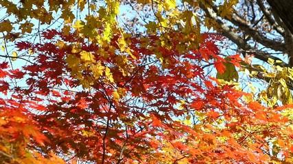 森の秋の風景・紅葉_21
