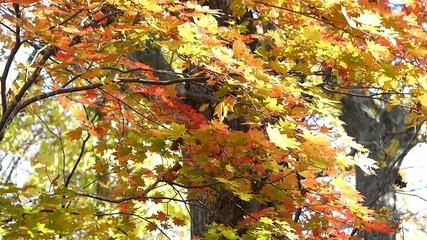 森の秋の風景・紅葉_20