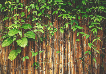 plant on bamboo