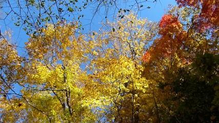 森の秋の風景・紅葉_15