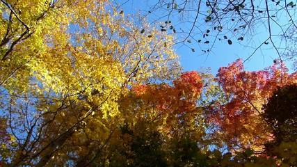 森の秋の風景・紅葉_14