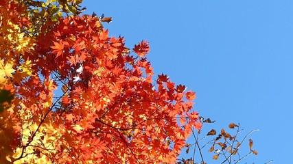 森の秋の風景・紅葉_12