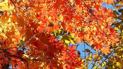 森の秋の風景・紅葉_11