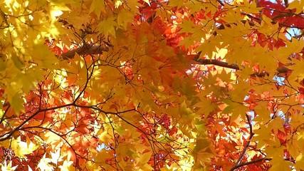 森の秋の風景・紅葉_9