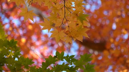 森の秋の風景・紅葉_8
