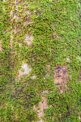 small plant on tree bark in forest