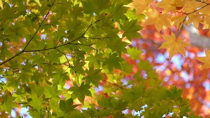 森の秋の風景・紅葉_7