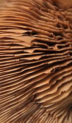 Mushroom, macro, texture