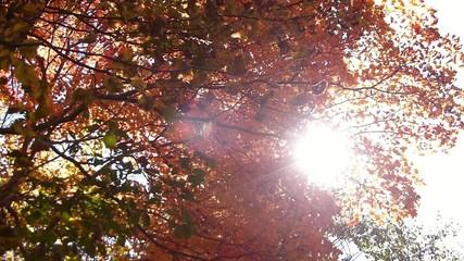 森の秋の風景・紅葉_5
