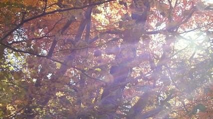 森の秋の風景・紅葉_3