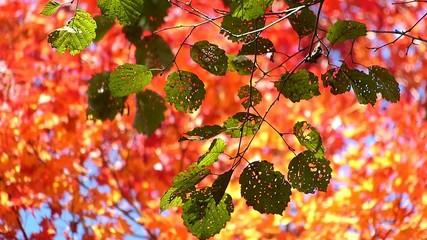 森の秋の風景・紅葉_2