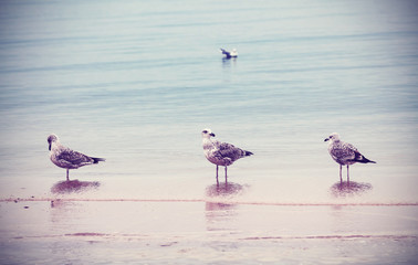 Retro style nature background. Birds on the beach.