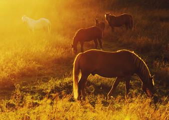 Magic herd