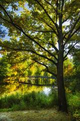 Autumn tree and lake
