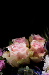 Delicate light-pink roses on a black background