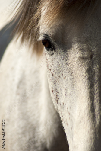 White horse in sunshine © HeinSchlebusch
