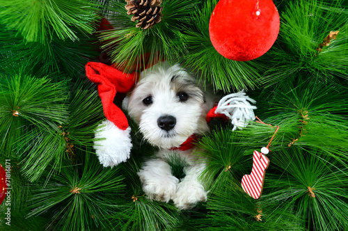 canvas print picture Christmas puppy