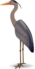 Heron - Illustration