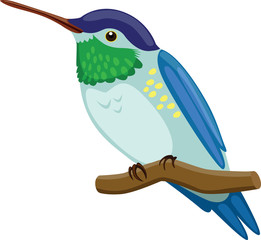 Hummingbird - Illustration