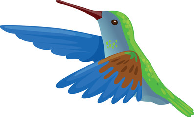 Hummingbird Flying - Illustration
