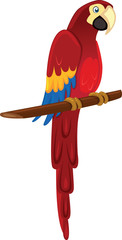 Parrot - macaw - Illustration